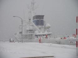 今日も雪・雪・雪だ!!!!