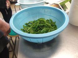 お茶の生葉料理体験会