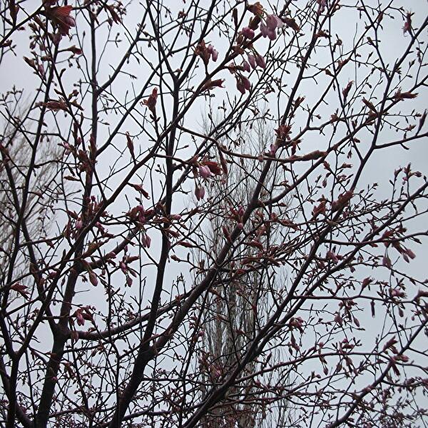 aa桜3.jpg