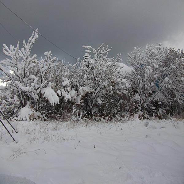 aaa樹氷6.jpg